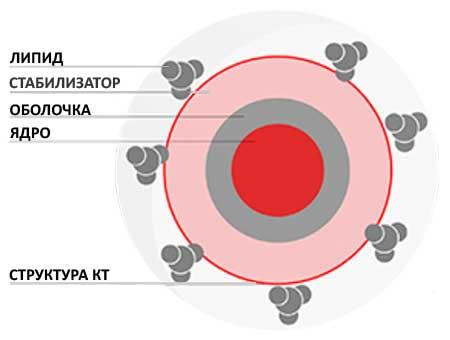 Квантовая точка состоит из ядра, оболочки, стабилизатора и липида