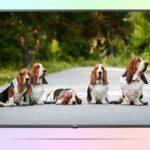 LG 43UM7500 Ultra HD из бюджетной серии UM7500